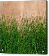 Grass And Stucco Acrylic Print