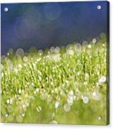 Grass, Close-up Acrylic Print by Tony Cordoza