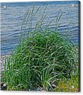 Grass On The Beach Acrylic Print