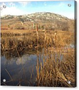 Grass Swamp And Snow Acrylic Print