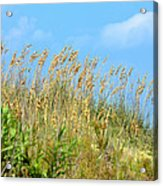 Grass Waving In The Breeze Acrylic Print