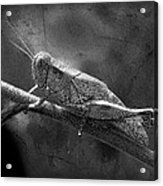 Grasshopper And Grunge In Black And White Acrylic Print
