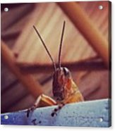 Grasshopper On My Rocker Acrylic Print by Dana Coplin