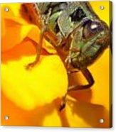 Grasshopper On Yellow Acrylic Print by Maureen  McDonald