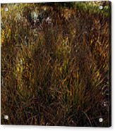 Grassland In Late Afternoon Acrylic Print
