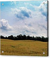 Grassy Country Fields Acrylic Print