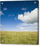 Grassy Field On Hill With Blue Skies Acrylic Print