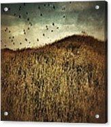 Grassy Hill Birds In Flight Acrylic Print