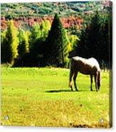 Grazing Autumn Acrylic Print