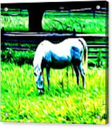 Grazing Horse Acrylic Print by Bill Cannon