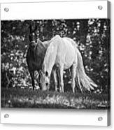 Grazing In Black And White Acrylic Print
