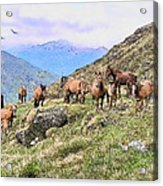 Grazing In The Foothills Acrylic Print