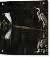 Great Blue Heron And Great Egret At Day's End Acrylic Print