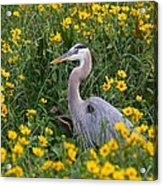 Great Blue Heron In The Flowers Acrylic Print