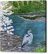 Great Blue Heron Acrylic Print by Judy M Watts-Rohanna