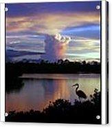 Great Blue Heron Sunset Acrylic Print