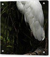 Great Egret 3 Acrylic Print
