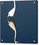 Great Egret Reflected Acrylic Print
