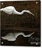 Great Egret Reflection 2 Acrylic Print