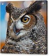 Great Horned Owl Portrait Acrylic Print