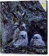 Great Horned Owl Twins Acrylic Print