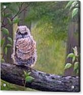 Great Horned Owlette Acrylic Print