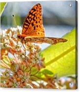 Great Spangled Fritillary Butterfly Acrylic Print
