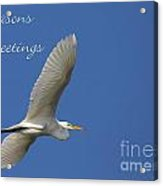 Great White Egret Holiday Card Acrylic Print