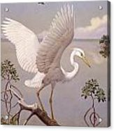 Great White Heron, White Morph Of Great Acrylic Print by Walter A. Weber