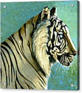 great White Hunter Acrylic Print by Andrea Camp