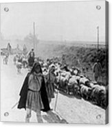 Greece Shepherds And Flocks - C 1909 Acrylic Print by International  Images
