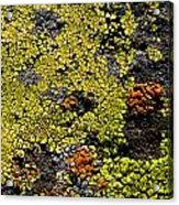 Green Algea Acrylic Print