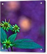 Green And Turquoise Acrylic Print