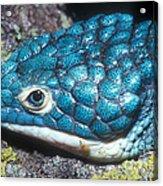 Green Arboreal Alligator Lizard Acrylic Print