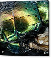 Green Blow Fly Acrylic Print