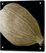 Green Cardamom Pod, Sem Acrylic Print by Steve Gschmeissner