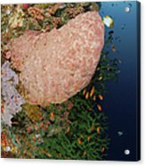 Green Coral With Red Fish And Pink Acrylic Print