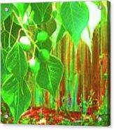 Green Curtain Acrylic Print by Juliana  Blessington