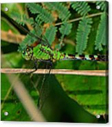Green Dragonfly At Pond - 51006573f Acrylic Print
