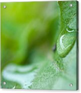 Green Drop Of Light Acrylic Print