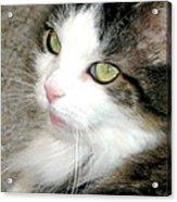 Green-eyed Cat Acrylic Print