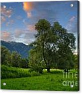 Green Field With Trees Acrylic Print