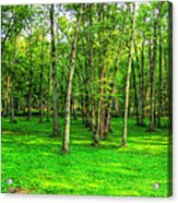 Green Floored Forest Acrylic Print