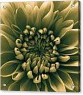 Green Flower Acrylic Print