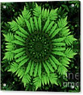 Green Forest Ferns Mandala - 2 Acrylic Print