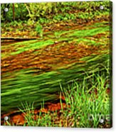 Green Forest River Acrylic Print