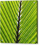 Green Fronds Acrylic Print