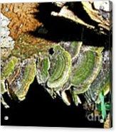 Green Fungi Acrylic Print