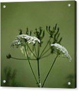 Green Garden Acrylic Print