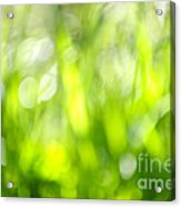 Green Grass In Sunshine Acrylic Print by Elena Elisseeva